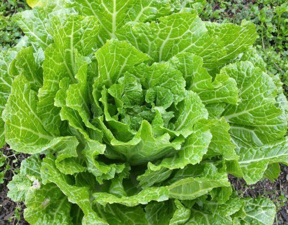 beneficii legume verzi